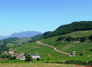 Jongieux vineyards in Savoie