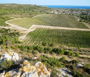 La Clape, Languedoc